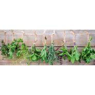 Cuadro-Herbs-String-30-80Cm-Vidrio