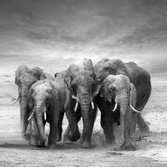 Cuadro-Les-Elephants-Iv-50-50Cm-Vidrio