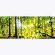 Cuadro-Forest-Panorama-Ii-50-125Cm-Vidrio