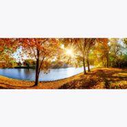Cuadro-Autumn-Forest-Panorama-50-125Cm-Vidrio