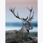 Cuadro-Mystic-Deer-Ii-60-80Cm-Mdf