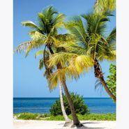 Cuadro-Florida-Palms-Morning-40-50Cm-Canvas
