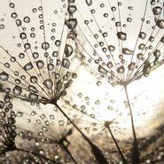 Cuadro-Bright-Dew-Drops-50-50Cm-Vidrio