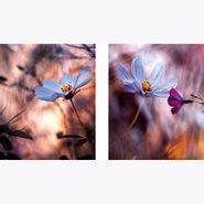 Set-2-Cuadros-Abstract-Light-Blue-Flowers-Ll-30-30Cm-Vidrio