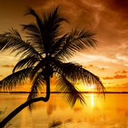 Cuadro-Florida-Palms-Sunset-40-50Cm-Canvas