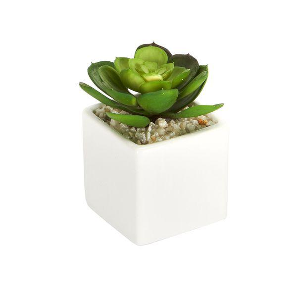 Planta-Artificial-Suculenta-8-8-12Cm-Ceramica-Blanco--------