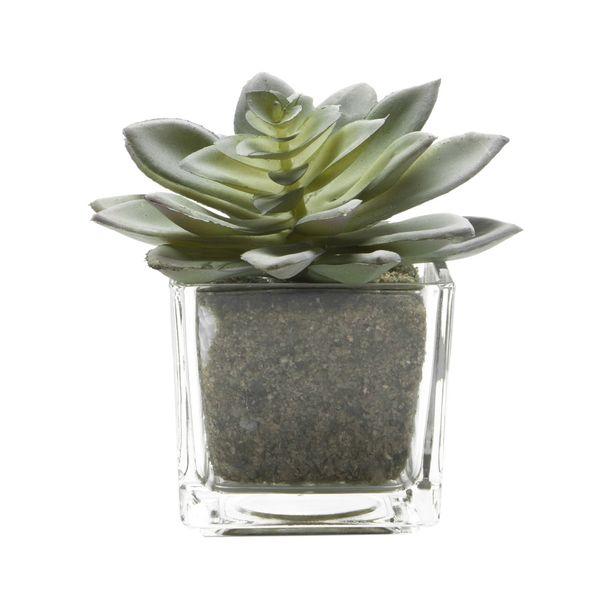 Planta-Artificial-Suculenta-Surt-9-16Cm-Vidrio--------------