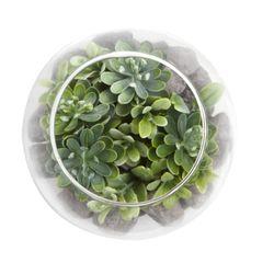 Planta-Artificial-Bonsai-Selva-Mini-12-10Cm-Vidrio----------