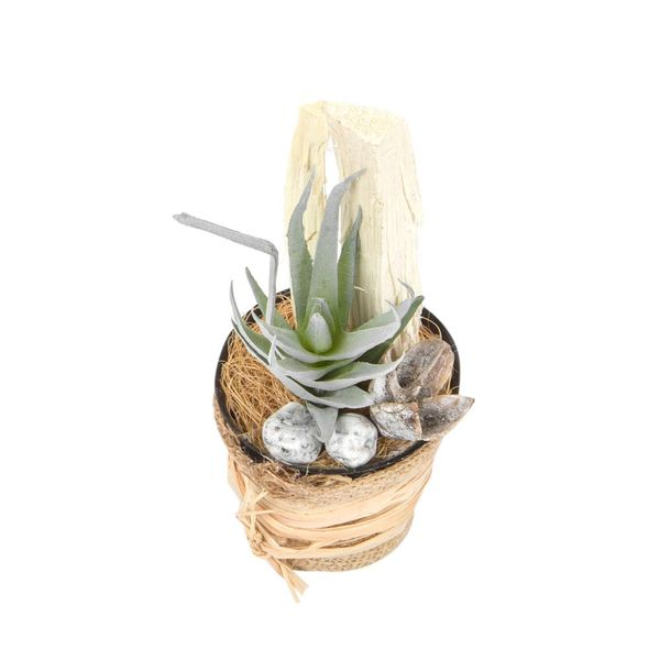 Planta-Artificial-Bonsai-Aloe-6-14Cm-Yute-------------------