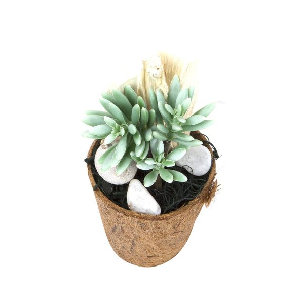 Planta-Artificial-Bonsai-Aloe-8-19Cm-Fibra-Coco-------------