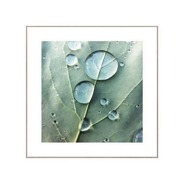 Cuadro-Dewdrops-50-50Cm-Papel-Marco-------------------------