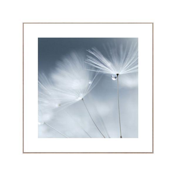 Cuadro-Dandelion-Dewdrops-50-50Cm-Papel-Marco---------------