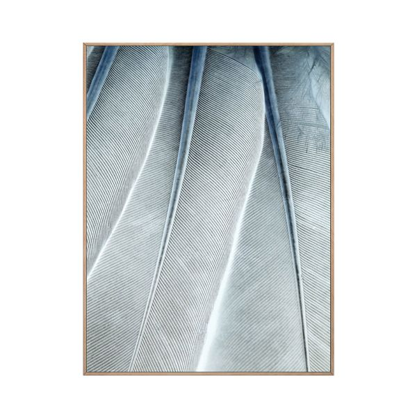 Cuadro-Fine-Feathers-30-40Cm-Papel-Marco--------------------