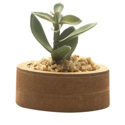 Planta-Artificial-Wood-Echeveria--7.4-2.7Cm-Mdf-Plastico----