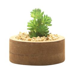 Planta-Artificial-Wood-Suculenta-7.4-2.7Cm-Mdf-Plastico-----