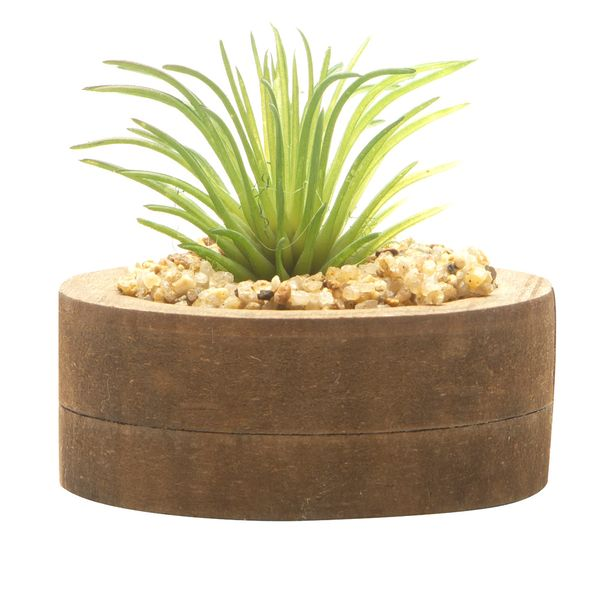 Planta-Artificial-Wood-Aloe-7.4-2.7Cm-Mdf-Plastico----------