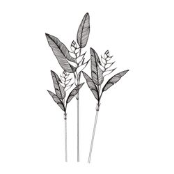 Vinilo-Decorativo-Heliconias-160-90Cm