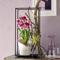 Matera-Orchidea-20-18-18Cm-Blanco