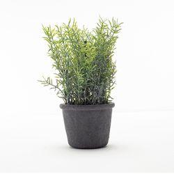 Planta-Artificial-Bonsai-M-Iris-10-25Cm-Negro