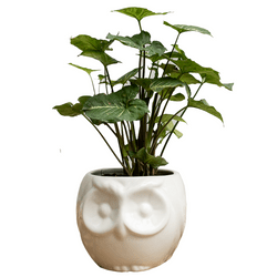 Matera-Decorativa-Buho-14-14-12Cm-Blanco