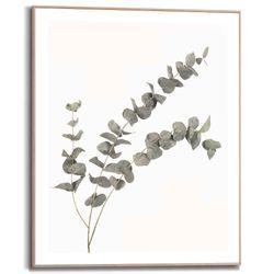 Cuadro-Eucalyptus-40-50Cm-