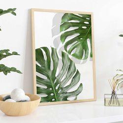 Cuadro-Transparente-Monstera-Leaf-I-30-40Cm