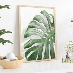 Cuadro-Transparente-Monstera-Leaf-II-30-40Cm