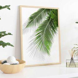 Cuadro-Transparente-Palm-Leaf-I-30-40Cm