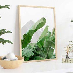 Cuadro-Transparente-Banana-Leaf-30-40Cm