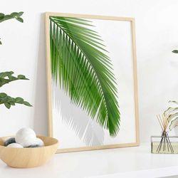 Cuadro-Transparente-Palm-Leaf-II-30-40Cm
