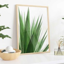 Cuadro-Transparente-Agave-Leaf-30-40Cm