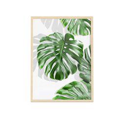 Cuadro-Transparente-Monstera-Leaf-III-30-40Cm